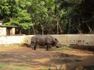 Zoo. Rhinoceros's skin is folded, creating the impression of armor.